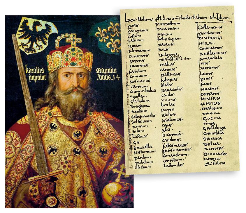 Анис должен выращиваться в аббатстве Святого Петра во Флавиньи – так повелевает Карл Великий!